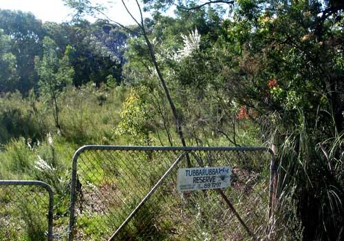 Tubbarubba Creek Gold Rush, Mornington Peninsula History